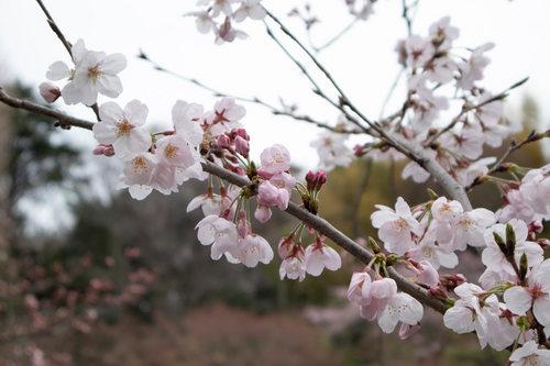 edogawabashi-301小小.jpg